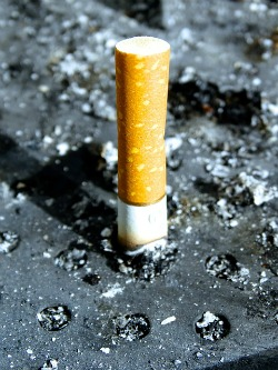 cigarette butt pic